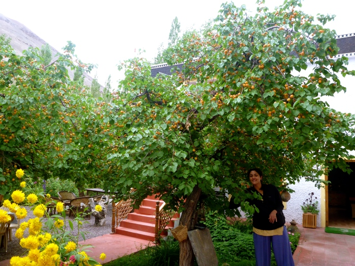 At the Namra Hotel, where they also had apricot trees