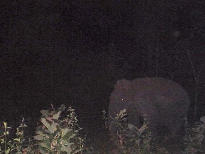 Wild elephants!
