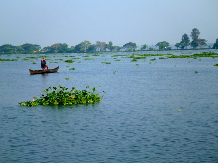 Backwaters in Kottayam