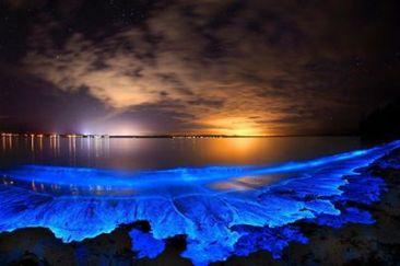 Bioluminescenteg-photo